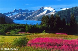 Mendenhall Glacier Flowers P109
