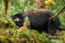 P209 Sleeping Bear