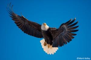 P210 Soaring Eagle
