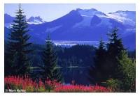 Auke Lake Fireweed 912