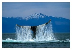 Whale Tail Waterfall by Mark Kelley