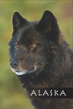 Black-Wolf-Alaska-Mark-Kelley-Magnet