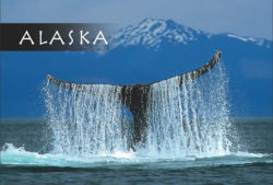 Humpback-Whale-Alaska-Mark-Kelley-Magnet