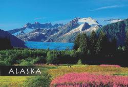 Mendenhall-Glacier-Flowers-Mark-Kelley-Magnet