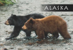 Twin_Bears-Alaska-Mark-Kelley-Magnet