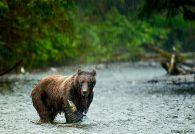 jnucal17-sep-20110804_rain_bear_031-23_v2-copy