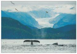 humpbacks_and_glaciers_mark_kelley_note_card_alaska_photography_alaska-photographer